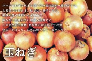 玉ねぎ -北海道産玉ねぎ-